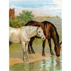 GI 304034 Диамантен гоблен - Красиви коне