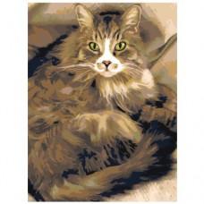 Картина по номера - Котка ZE-3090