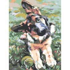 Картина по номера - Куче ZE-3108