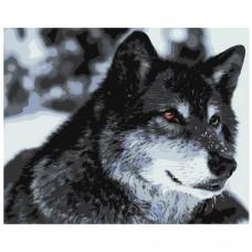 Картина по номера -  Вълк ZG-0077