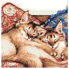 Картина по номера -  Котки ZP-002