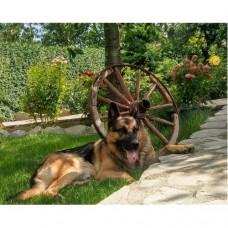 Картина по номера -  Овчарско куче в градината ZG-0255