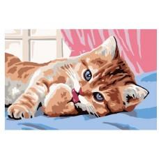Котката се събуди - Картина по номера CX 3524